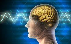 Desmontando a Sigmund: Psicología básica I: La memoria