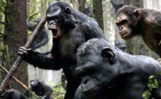 Celda de cifras: Los simios quieren mandar este verano