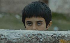 Venecia 2014: Maltrato animal y entre la enfermedad y el reencuentro