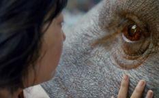 "Espresso: Trailer de ""Okja"", la película de Netflix que compite en Cannes"