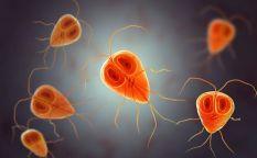 Historias víricas (X): Parásitos